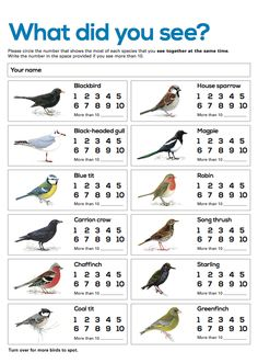Garden birds survey sheet (SB4364) - SparkleBox   Bird ...