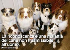 Photo: Buongiorno e buona domenica zampette!!! Ecco l'aforisma di oggi:  La riconoscenza è una malattia del cane non trasmissibile all'uomo.  (Antoine Bernheim)  (fonte: carterse via Flikr)