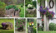 18 Old Tree Stumps Turned Into Beautiful Flower Planters - The ART in LIFE