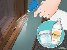 6 Cosas que debes hacer para eliminar los insectos y arañas de tu hogar