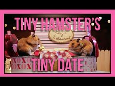 Tiny Hamsters Go On A Tiny Date And It's The Cutest