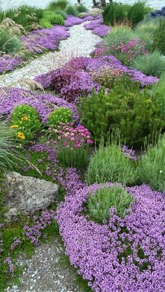 A pathway of beautiful flowers allows water to penetrate the earth.