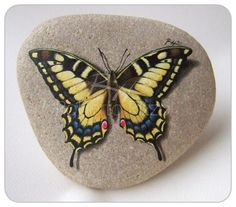The painting on the rocks - the secrets of live butterflies and drops by Roberto Rizzo and Maurizio Moreza