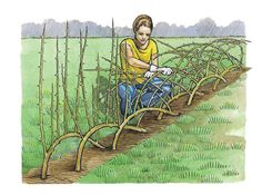 """A living fence is a permanent hedge tight enough and tough enough to serve almost any of the functions of a manufactured fence, but it offers agricultural and biological services a manufactured fence cannot. For instance, it provides ""edge habitat"" that supports ecological diversity."""