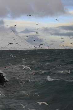 The sea...Seagulls By Sverrir Thorolfsson