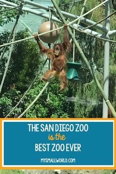 The San Diego Zoo is the best zoo ever.  Don't believe me?  I have six adorable reasons why you should take your kids and find out for yourself. | San Diego Zoo Tips | San Diego Zoo With Kids | San Diego Zoo Animals |