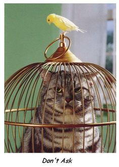 I love birds and I love cats, but you got to love the humor/irony in this photo. I actually have a bird cage like this with a stuffed cat made of pretty fabric filling the interior as a decorative piece in my living room. I Love Cats, Cute Cats, Funny Cats, Funny Animals, Cute Animals, Animal Fun, Baby Animals, Wild Animals, Crazy Cat Lady