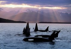 San Juan Islands, Washington state. One of the most beautiful places ever. Wild orcas, yes please!