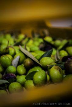 Laudemio La Costa Extra Virgin Olive Oil