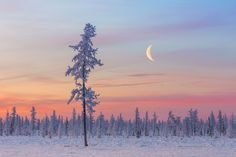 ***Early morning on the tundra of the Polar Urals (Priuralski District, Yamal, Russia) by Kirill Uyutnov