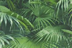 3d hatású,természeti mintás,zöld,lemosható,vlies tapéta