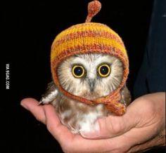 Baby owl cuteness overload wearing Jayne's hat!