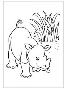 Rhino Coloring Pages For Child   Preschool And Kindergarten