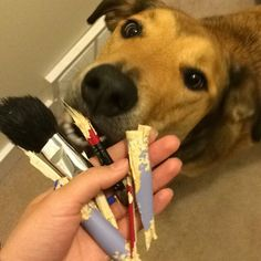 When you're dog is just as obsessed with makeup as you at least these were back up brushes { Cinnamon Sticks, Brushes, Puppies, Makeup, Dogs, Instagram, Make Up, Cubs, Pet Dogs