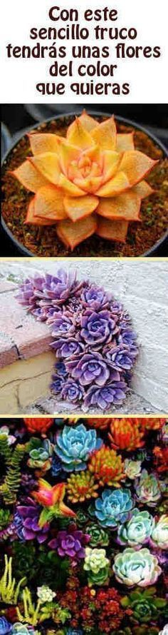 With this simple trick you get some flowers of the color you want Cacti And Succulents, Planting Succulents, Cactus Plants, Garden Plants, Indoor Plants, House Plants, Planting Flowers, Inside Plants, Cactus Y Suculentas
