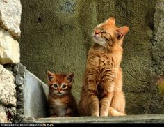 funny pictures - Cyoot Kittehs of teh Day: Proud Mama