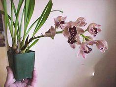이미지 출처 http://img.photobucket.com/albums/v260/rredbbeard/Orchids/orchid1.jpg