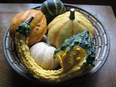 My motto for gourds: the uglier the better.
