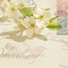 White apple blossom flowers, vintage letters, stamps and sunshine