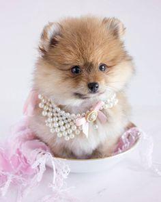 que  elegante cachorra
