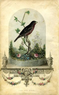 Bird Vivarium for Godey's Lady's Book, by W. E. Tucker (1800's).