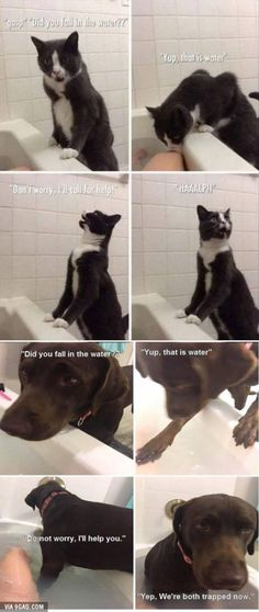 Cat Vs. Dog.