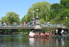 Boston Swan boats pass under the Public Gardens suspension bridge
