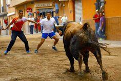 torodigital: Jornada taurina de las fiestas en honor a San Fra...