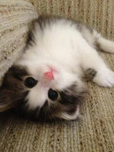 If only we could all be so happy :) Upside Down Kitteh! Cats :D Funny cute cat Cute Cats And Kittens, I Love Cats, Crazy Cats, Kittens Cutest, Pretty Cats, Beautiful Cats, Animals Beautiful, Mundo Animal, My Animal