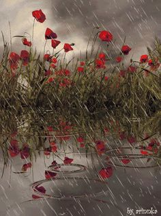 Poppies and rain rain and flowes what a clean sweet smell