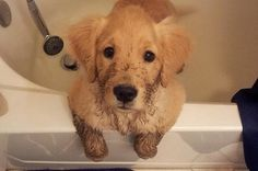19 Muddy Puppies Who Are Impossible To Get Mad At