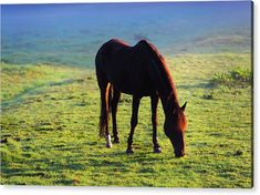 Lit with Golden Sun by Jenny Rainbow.Early foggy morning with thick layer of fog filled with rising sun covering the field where peacefully grazing the horse. Art Prints For Home, Fine Art Prints, Pet Dogs, Pets, Thing 1, Golden Sun, Foggy Morning, Buy Art Online, Iconic Movies