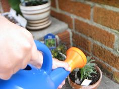 It is often difficult to gauge how much water for container garden plants is necessary. There is a fine line between drought and soggy soil. Get tips and hints to determine when to water container plants here. Water Flowers, Water Plants, Water Garden, Potted Plants, Garden Plants, House Plants, Fence Garden, Garden Compost, Outdoor Plants