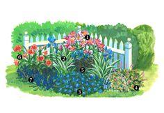 The Sunny Corner Bed  1. Echinacea purpurea 'Pink Double Delight' – Zone 3  2. Iris pallida 'Argentea Variegata'- Zone 3  3. Geranium 'Rozanne' – Zone 4  4. Heucherella 'Alabama Sunrise' - Zone 4  5. Polemonium yezoense Bressingham Purple – Zone 3  6. Hemerocallis 'Pardon Me' – Zone 2  7. Salvia 'Marcus' – Zone 3