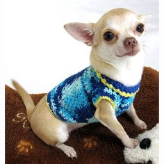 Navy Blue Chihuahua Clothes Extra Small Cotton XS Dog by myknitt