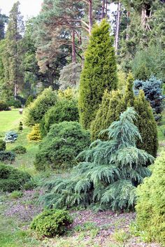 Bedgebury Pinetum dwarf conifer collection