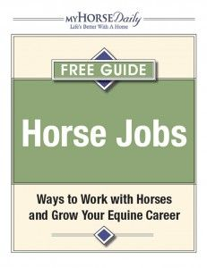 Ways to Work with Horses and Grow Your Equine Career