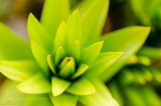69/365 - green by sfPhotogrphr