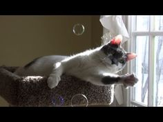 ▶ Leo the Cat Plays with Bubbles - YouTube
