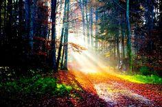 O caminho da luz sempre foi por aqui.