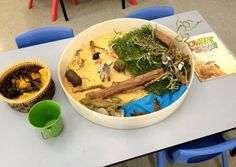 wombat stew Wombat Stew, Preschool Literacy, Australia Day, Australian Animals, Book Crafts, Early Childhood, Learning Activities, Teaching Ideas, Book Week