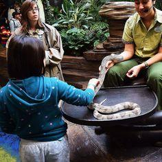 Queremos saber quem teria coragem de fazer carinho neste bichinho tão simpático que encontramos na Conservation Station do Rafiki Planet Watch no Animal Kingdom. #malasepanelas #disney #wdw #animalkingdom #orlando #visitorlando #VisiteosEUAbr #cobra #coragem #viagemcomcriancas #latergram
