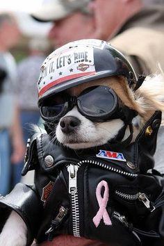 I just ♥ Biker Chi!