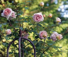 Gallery: An English Country Garden - Carolina Home + Garden - Fall 2009 - Western North Carolina