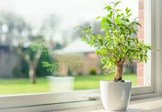 Keep your space lively and your houseplants alive. Learn how in today's blog from UBH.