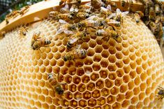 We May Have Solved the Mystery of the Dying Bees - Biology, Earth and Environmental Science