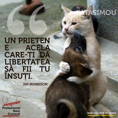 Profesional New Consult Jim Morrison, Motto, Animals And Pets, Spirituality, Inspirational Quotes, Faith, Photography, Life, Sweet
