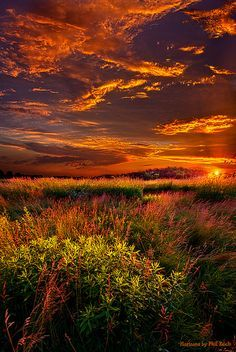 Lost in the World by Phil~Koch
