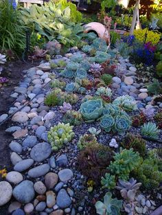 For those people who living in dry areas, having a beautiful and easy-to-maintain garden is not an easy task. Fortunately, you can create succulent landscapes for your garden. Succulents are definitely popular and trendy in garden landscaping at the moment. They can tolerate dry conditions, low levels of water and high temperatures, so succulent plants […]... Dry Creek Bed, Cactus Flower, Flowers, Outdoor Decor, Plants, Garden, Home Decor, Homemade Home Decor, Florals