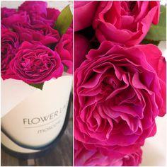 ... Raspberry Cordial, Bouquet Box, Peonies, Ranunculus, Flower Boxes, Pretty Flowers, Colours, Florals, Lab